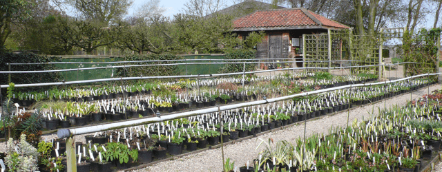 Stillingfleet Lodge Plant Nursery