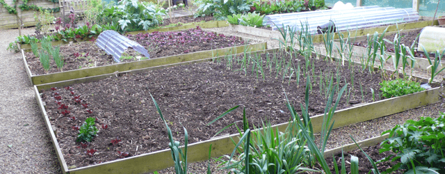 Vegitable Garden