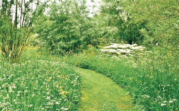 meadow_3000540b