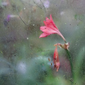 In the rain 300x300 Selby Camera Club Exhibition