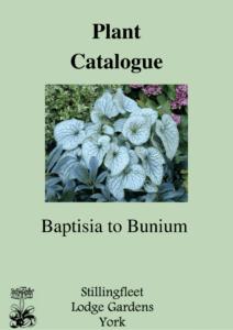 Baptisia to Bunium listing