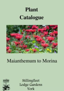 Maianthemum to Morina listing