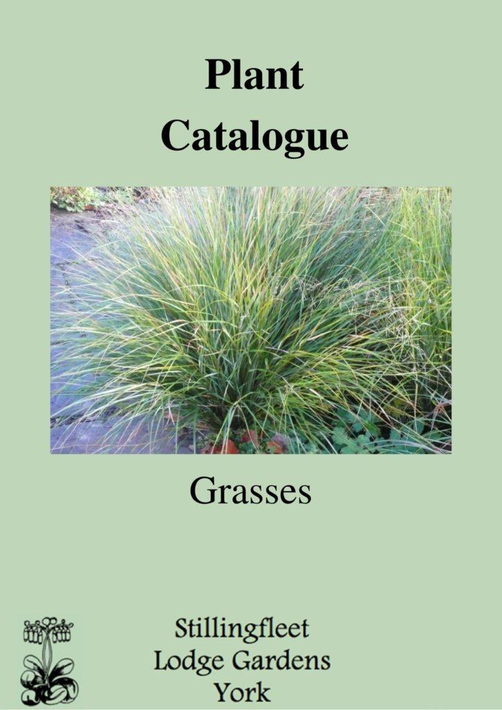 Plant Catalogue - Grasses