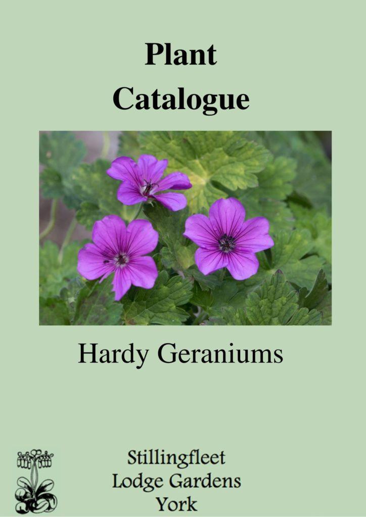 Plant Catalogue - Hardy Geraniums