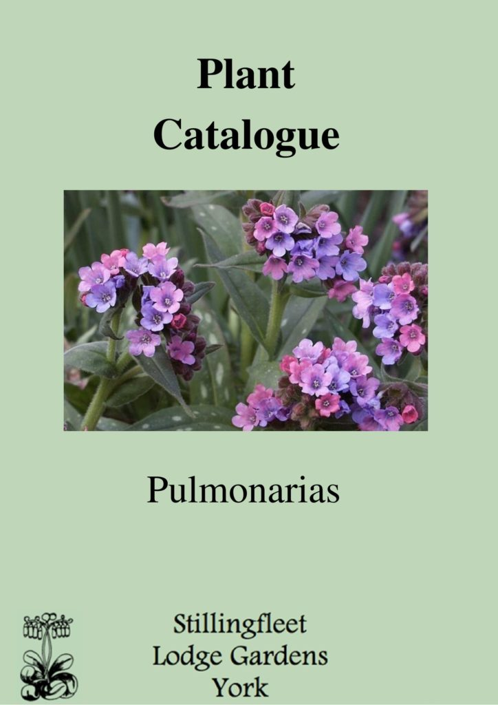 Pulmonaria catalogue cover