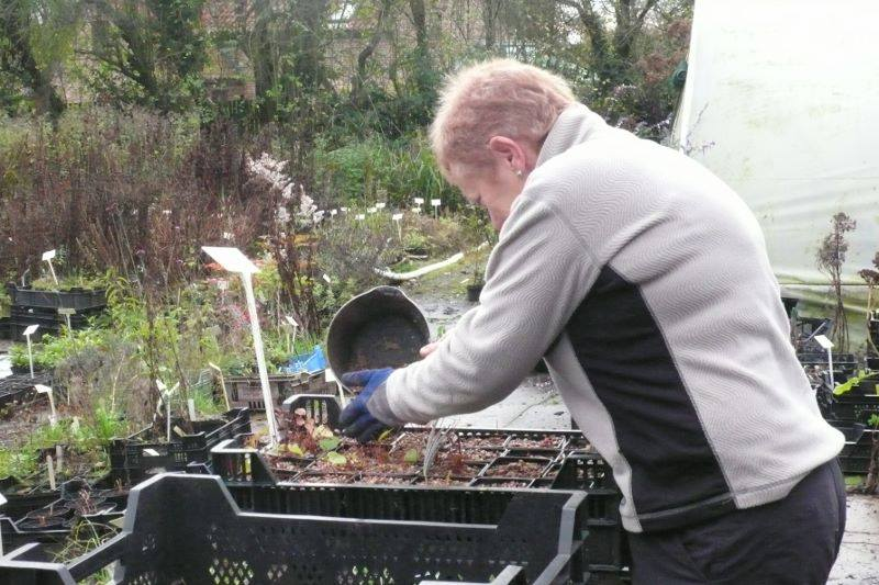 Preparing plants in the nursery