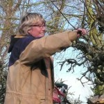 apple pruning course